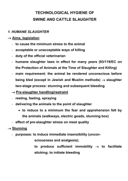 Technological hygiene of swine and cattle slaughte