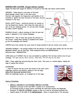 Respiratory System: Oxygen Delivery System