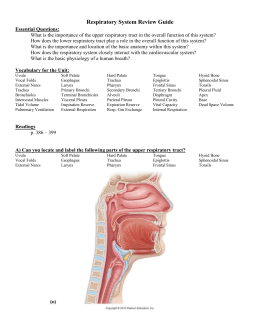 Respiratory System Review Guide