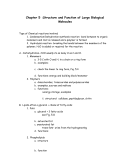 Chapter 6 Study Guide Key