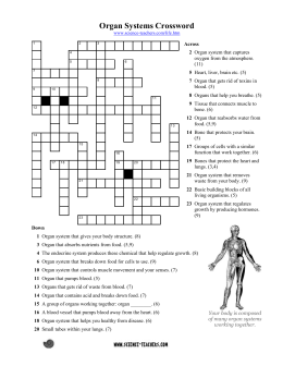 Organ System Crossword - Science Teacher Resources