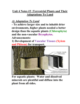 Unit 4 Notes #3 :Terrestrial Plants and Their Adaptations To Land