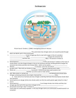 Nitrogen Cycle Homework Answer Key