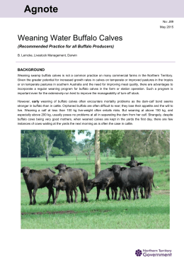 Weaning Water Buffalo Calves - Northern Territory Government