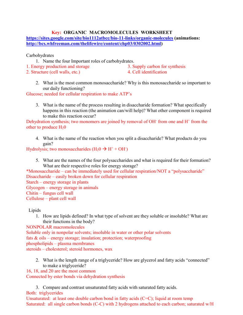 worksheet Organic Molecules Worksheet Review Key key organic macromolecules worksheet