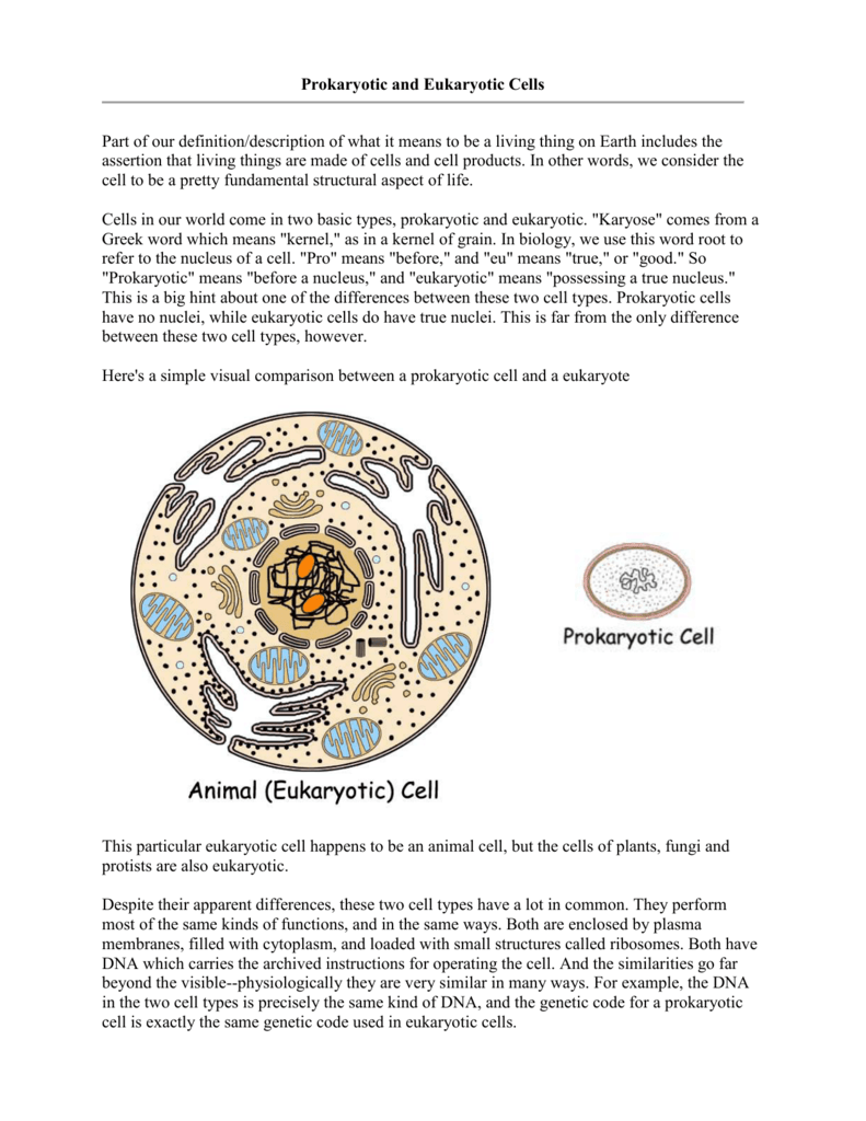 Prokaryotic Vs Eukaryotic Cells Information Cell