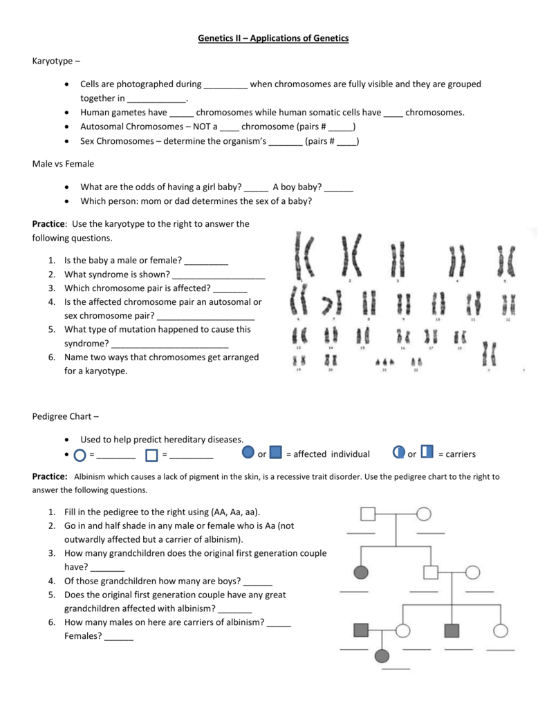 worksheet Chapter 12 Patterns Of Heredity And Human Genetics Worksheet Answers genetics ii notes and practice