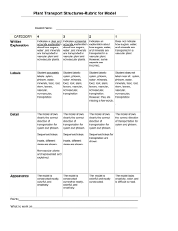Rubric for Model