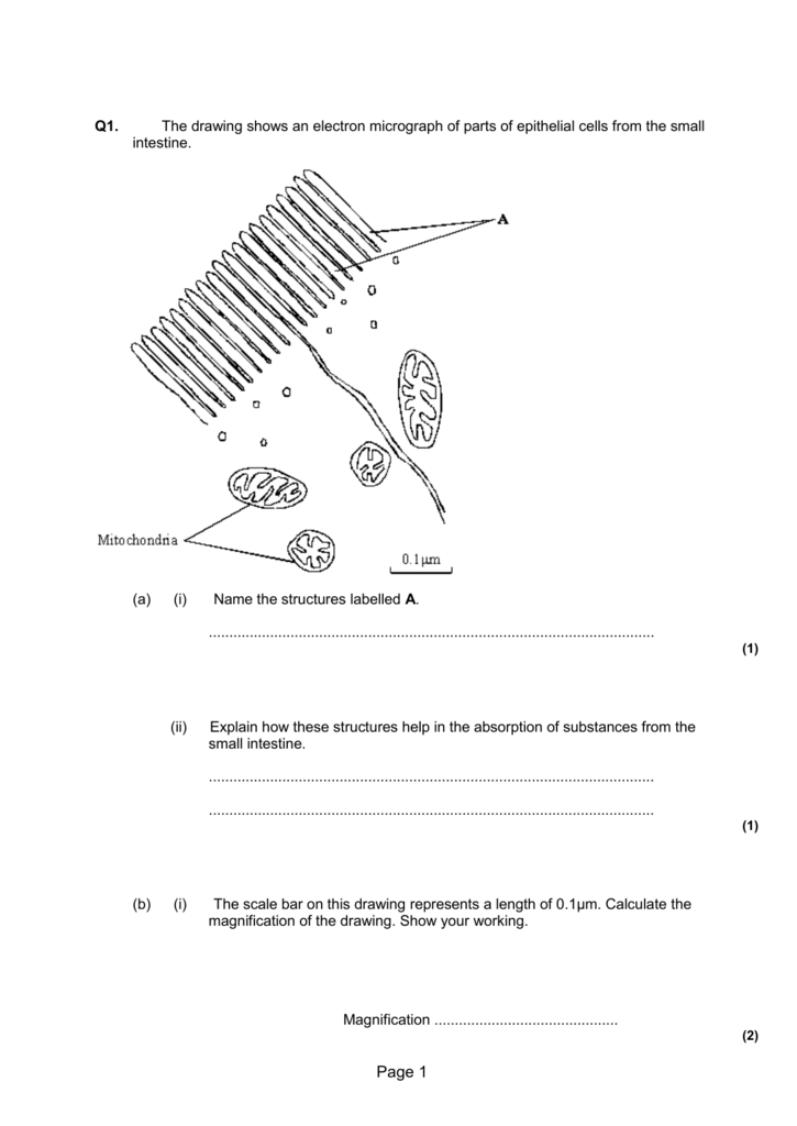 Q1 The Drawing Shows An Electron Micrograph Of Parts Of Epithelial