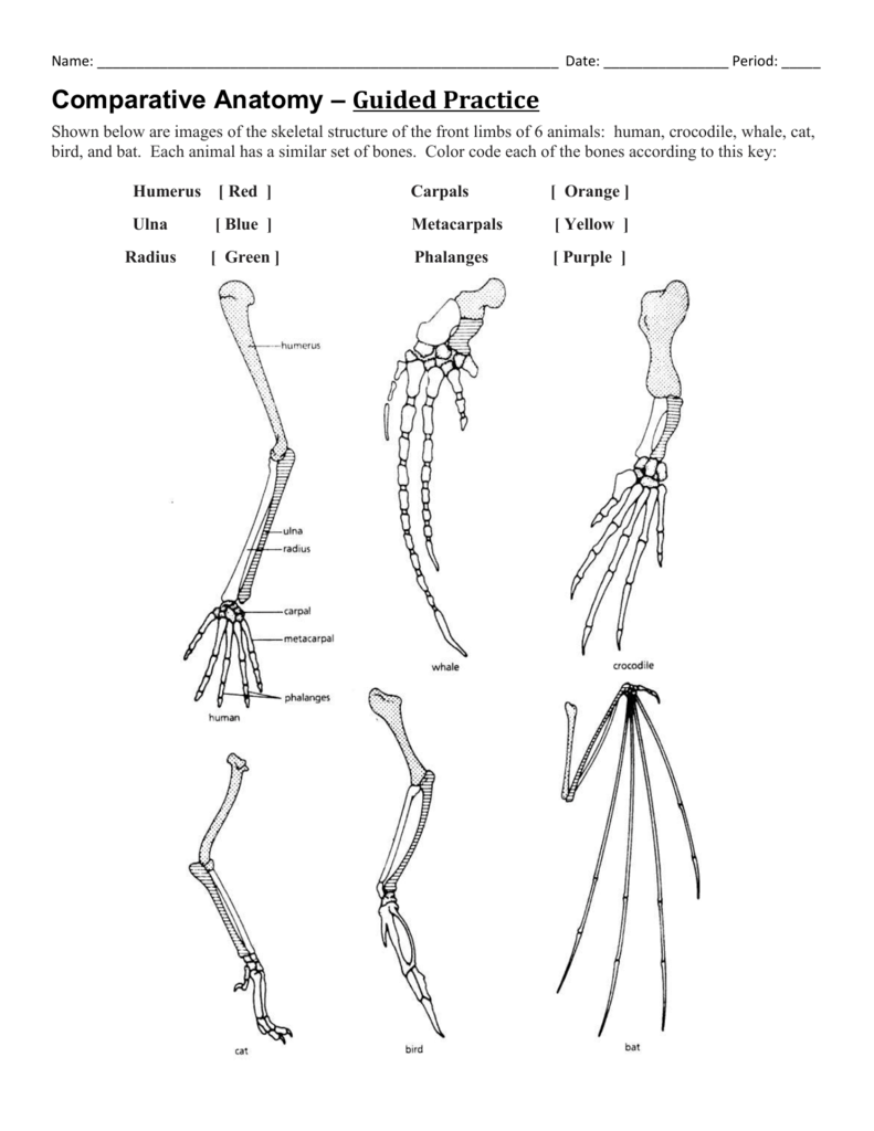 Whale Arm Bones Diagram - Electrical Drawing Wiring Diagram •