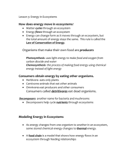 How does energy move in ecosystems