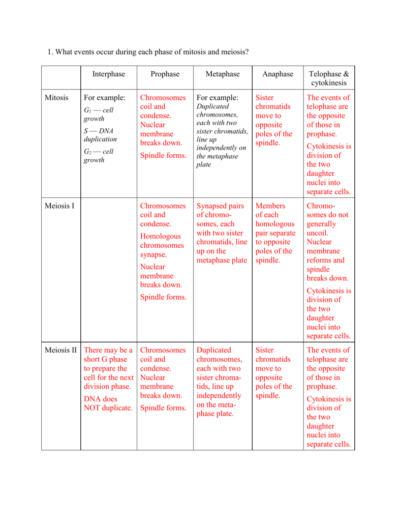 1 What Events Occur During Each Phase Of Mitosis And Meiosis