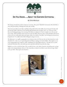 Do You Know**About the Eastern Cottontail