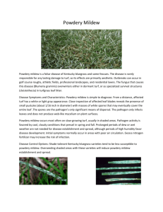 Powdery Mildew - Gran-U-Lawn