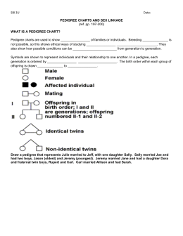 Pedigree Worksheet & KEY
