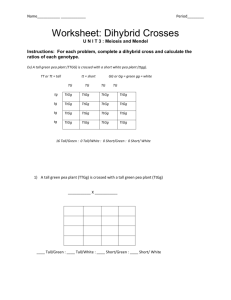 Bestseller: Biology Chapter 10 Dihybrid Cross Worksheet ...