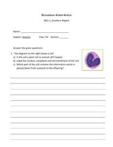 Worksheet - Animal & Plant Cells