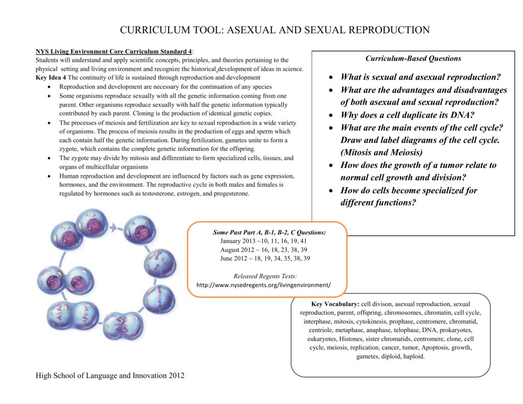 What is sexual and asexual reproduction – Sexual and Asexual Reproduction Worksheet