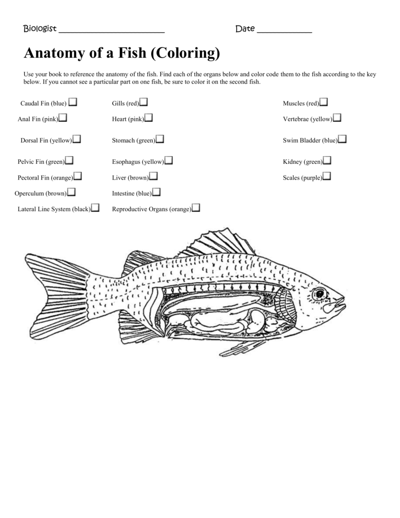 Fish Disection Pictures Color Worksheet Coloring Pages