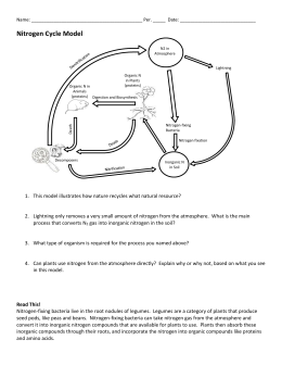 Worksheet: Carbon and Nitrogen Cycle