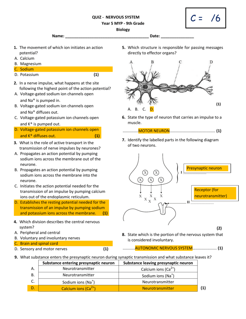 C 6 quiz nervous system year 5 myp ccuart Image collections