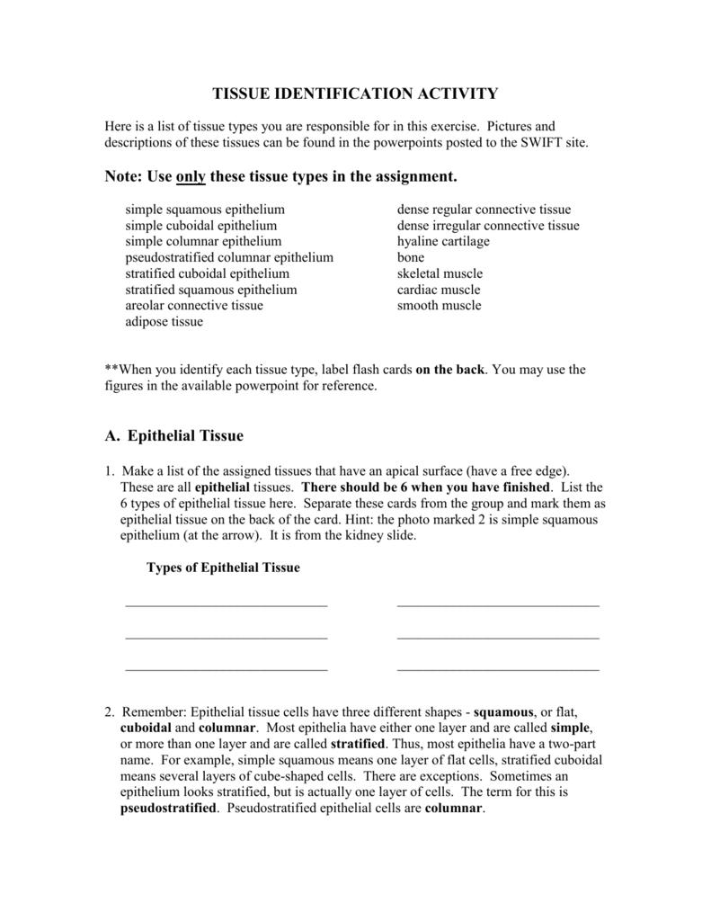 Tissue ID Lab (Lyons Revisions))