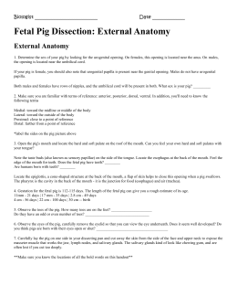 Fetal pig dissection external anatomy answers