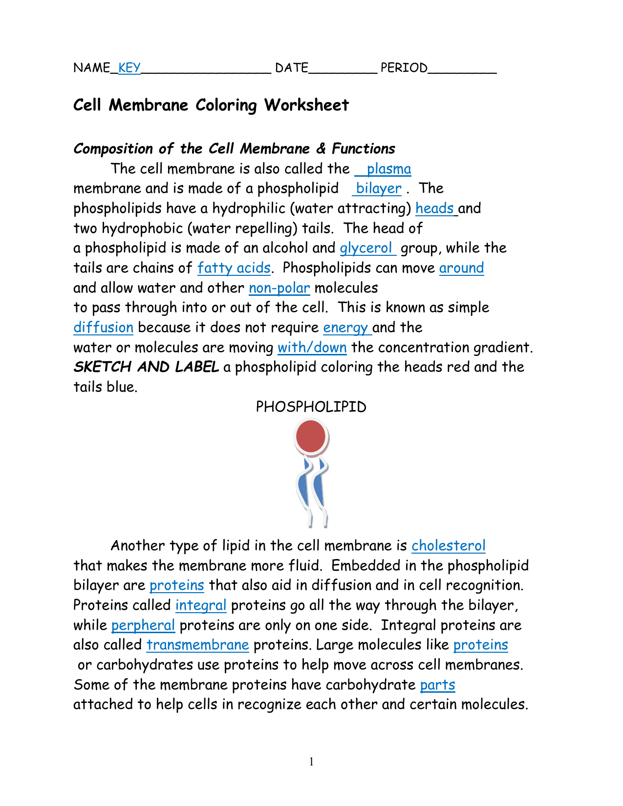 cellmembranecoloringworksheetKEY – Cell Membrane Coloring Worksheet