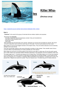 Biology 2 SAC Killerwhale Project 2014  - SandyBiology1-2