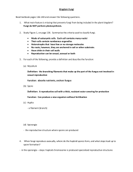 10 Fungus Practice Worksheet (ANSWERS) jw