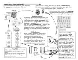 Notes: Overview of DNA and Genetics 3/9 A human (Eukaryotic) cell