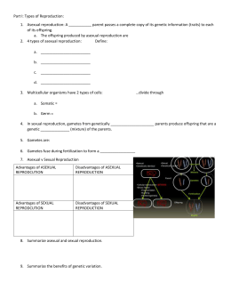 chromosomes and meiosis reinforcement worksheet. Black Bedroom Furniture Sets. Home Design Ideas