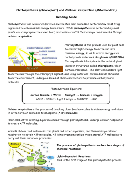 Photosynthesis (Chloroplast) and Cellular Respiration