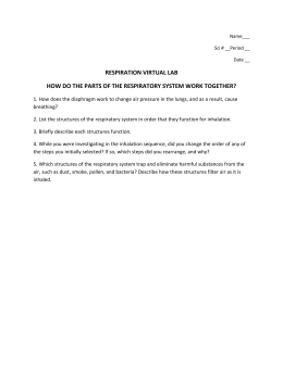 respiration virtual lab paperwork 7th grade