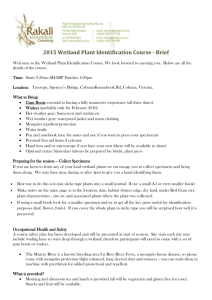 Brief on Wetland Plant ID Course 2015