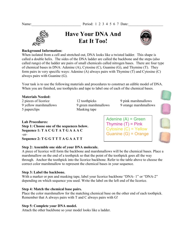 worksheet 12.2 The Structure Of Dna Worksheet Answers have your dna and eat it too