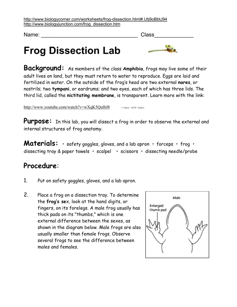 Frog dissection 2014