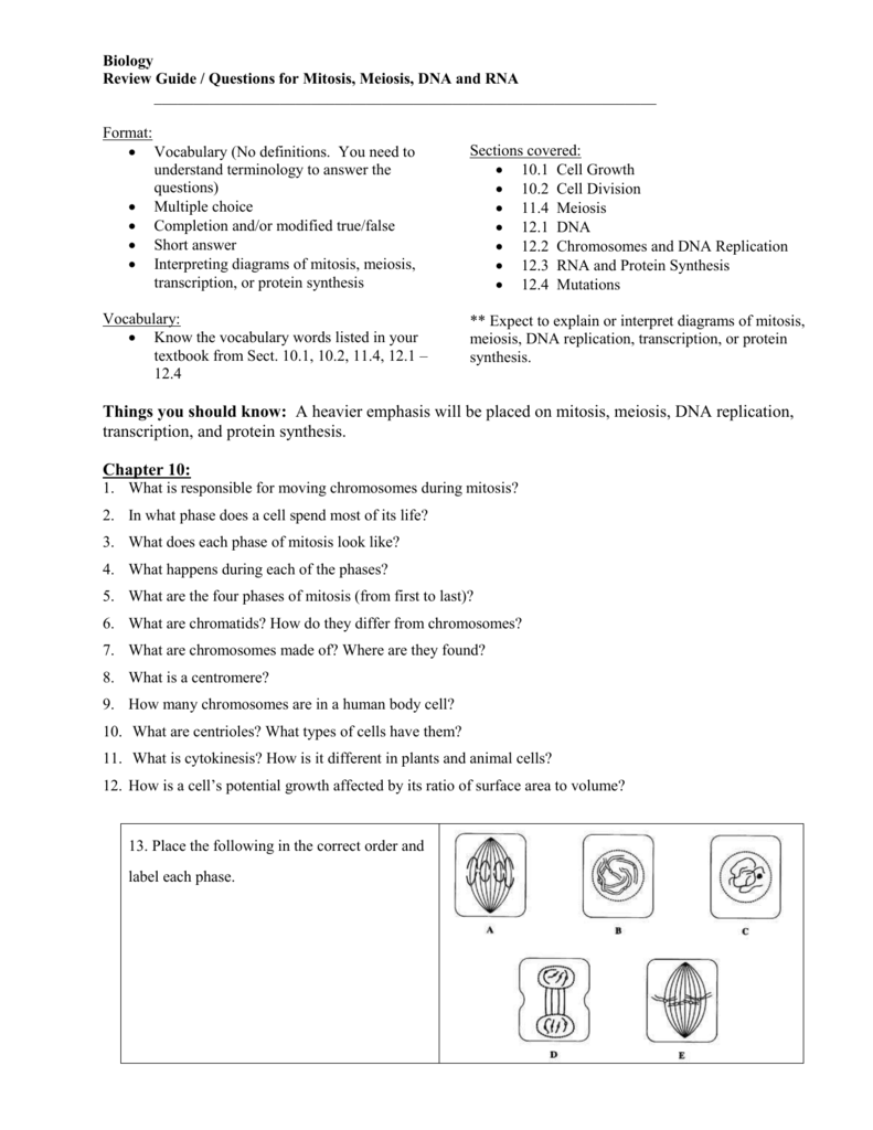 worksheet Chapter 10 Mendel And Meiosis Worksheet Answers workbooks meiosis worksheets free printable for pre section 102 worksheet answers the best and most