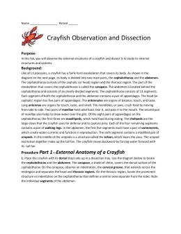 Crayfish Dissection - SSSD-Bio