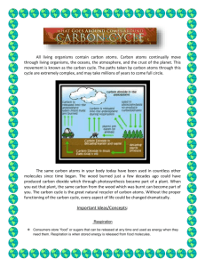 Carbon Cycle Notes
