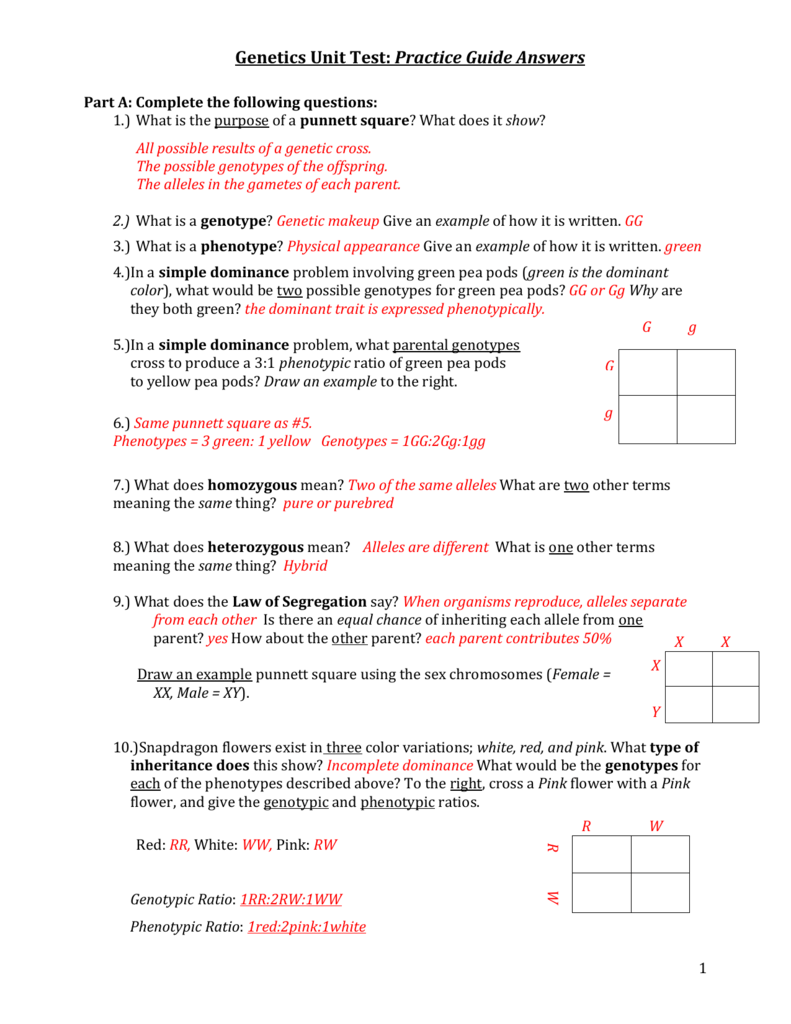 worksheet Dragon Genetics Worksheet genetics practice guide