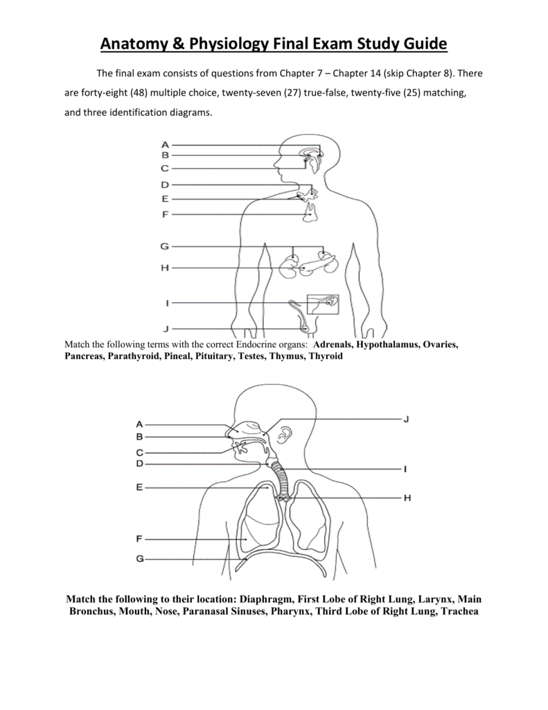 Anatomy And Physiology Final Exam Practice Test