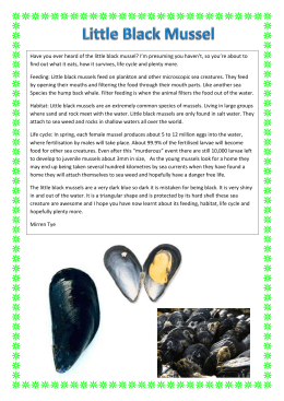 Mirren- Little black mussels