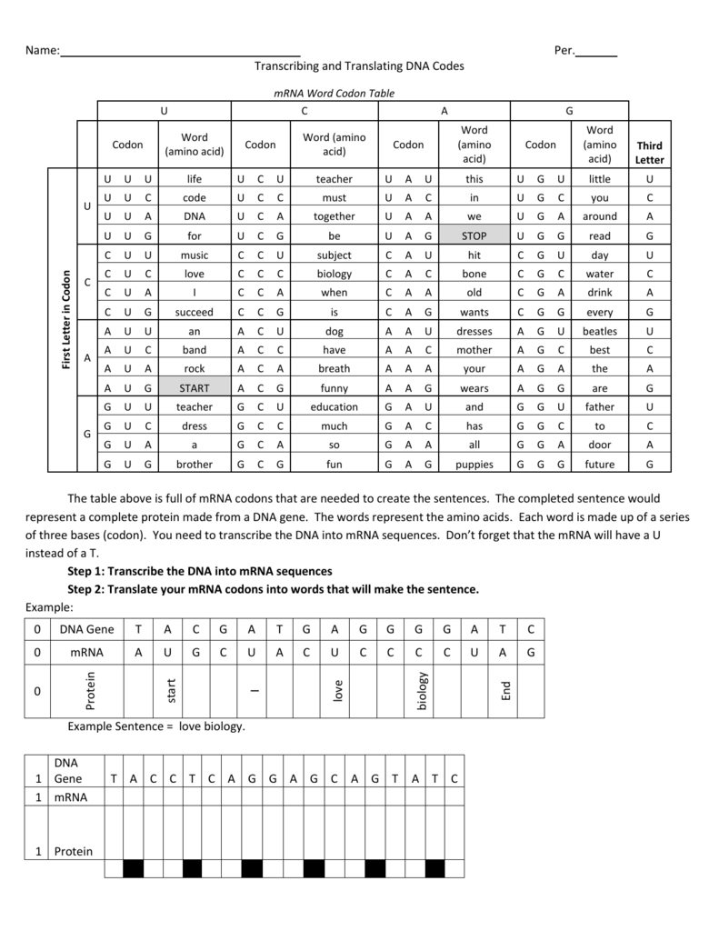 Name Per Transcribing And Translating Dna Codes Mrna Word