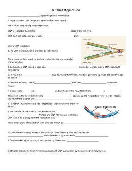 29 123 Dna Replication Worksheet Answers - Worksheet ...