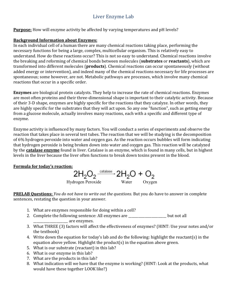 catalase enzyme activity lab report