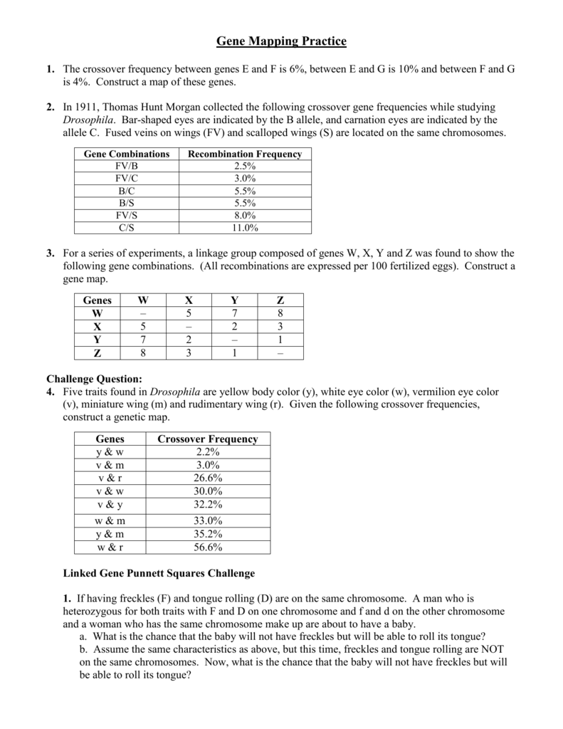 Gene Mapping Worksheet on