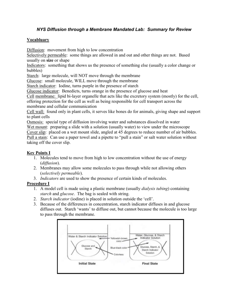 NYS Diffusion Through a Membrane State Lab Review Notes