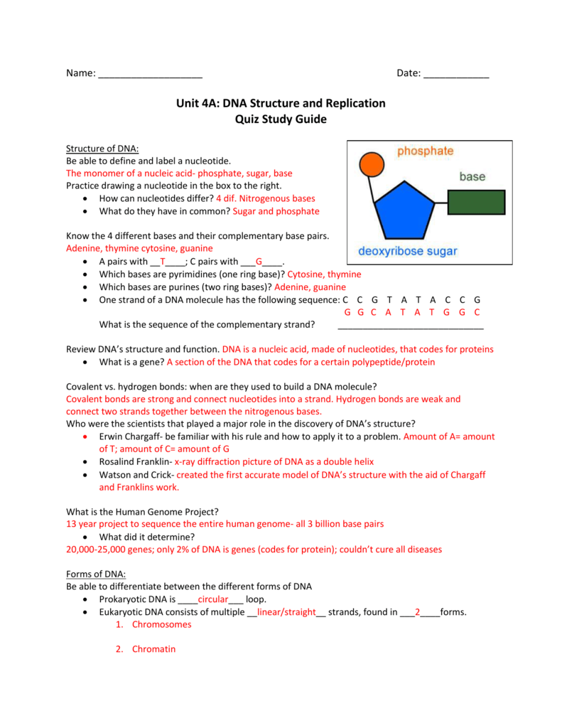 Dna Replication Structure Manual Guide