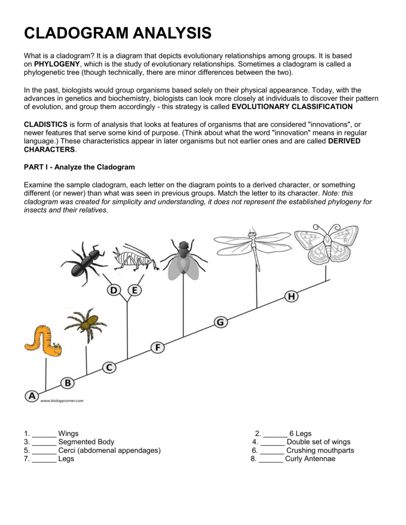 Worksheets Cladogram Worksheet cladograms